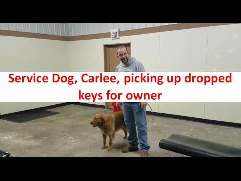 Columbus Ohio Dog Training with Terry Cook: Dog Picking up Dropped Keys For Owner