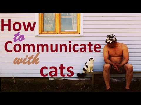 3 Simple Ways to Understand Cat language on How to Communicate with Cats