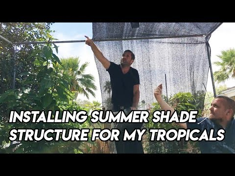 Ep163 - Installing Summer Shade Structure for My Tropicals