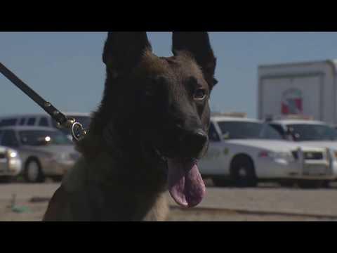 State senator, KCSO advocate for Police Dog Protection Act