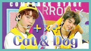 Download [HOT] TOMORROW X TOGETHER - Cat & Dog , 투모로우바이투게더 - Cat & Dog Show Music core 20190427 Video