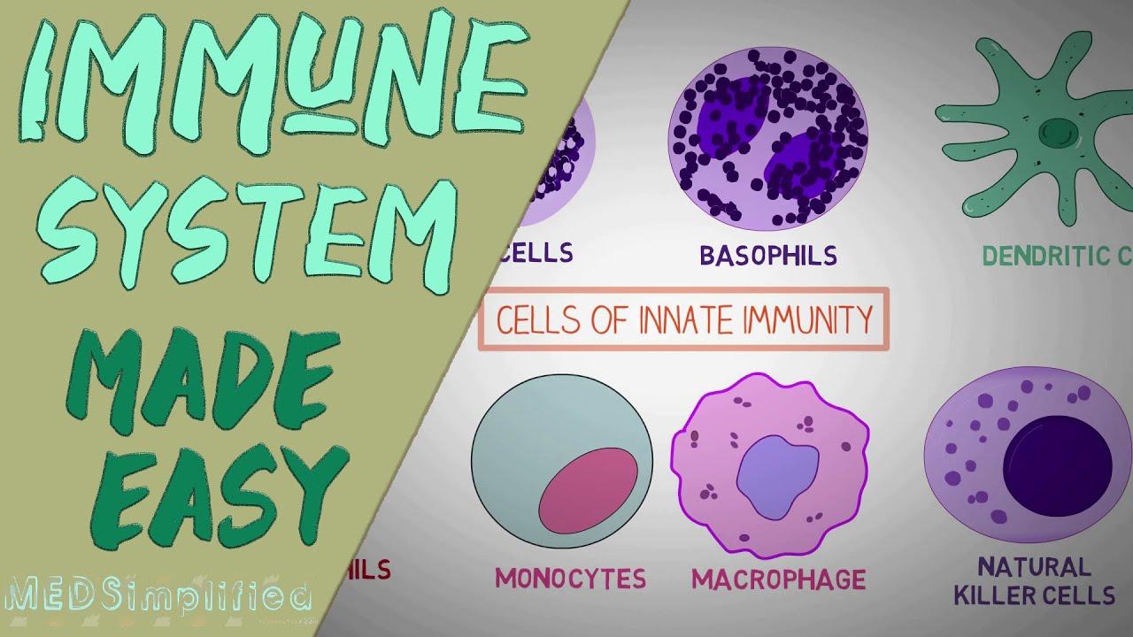 IMMUNE SYSTEM MADE EASY- IMMUNOLOGY INNATE AND ADAPTIVE IMMUNITY SIMPLE ANIMATION