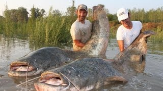 CATFISH IN SPINNING MONSTER RECORD OVER 250 POUNDS by CATFISHING WORLD
