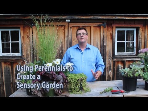 Perennials For Sensory Gardens