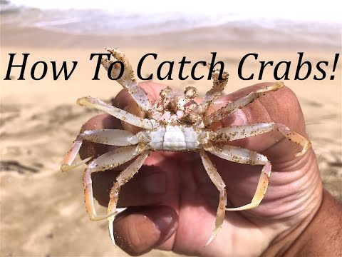 HOW TO CATCH CRABS!