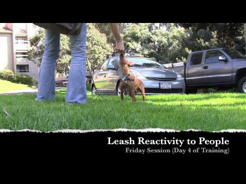 Miniature Pinscher: Training For Dog and People Reactivity, Aggression