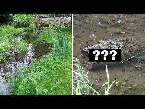 SMALL Creek Minnow Trap ~ What Do I Catch?!?