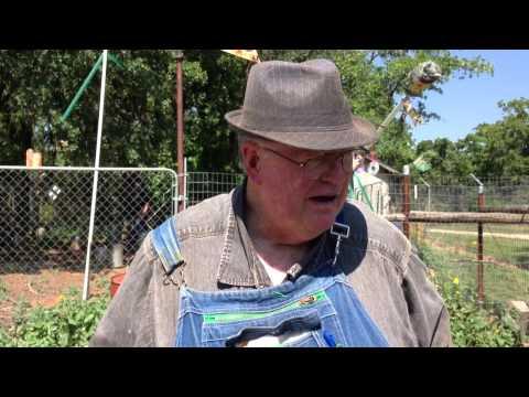 Burleson Handyman / Get Rid Of Hawks In Chicken Coupe Burleson Texas 76028