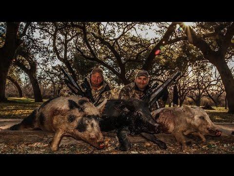 Benjamin Pioneer Airbow Hog Hunting