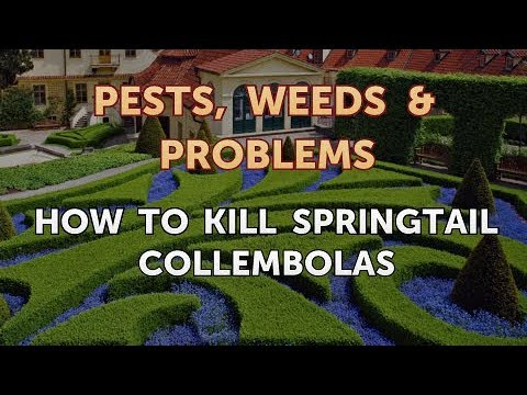 How to Kill Springtail Collembolas