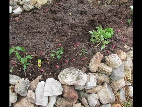 Rock Wall Raised Bed - Planting