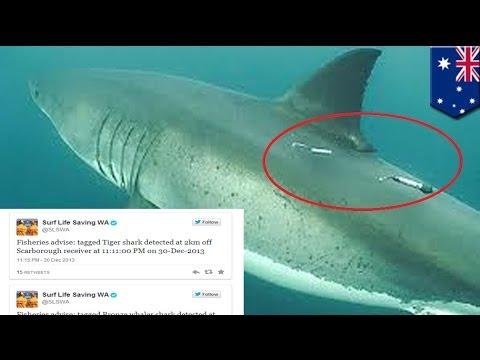 Western Australia alerts beachgoers of sharks' presence via Twitter