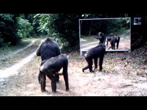 What Happens When Scientists Install A Mirror In The Hoodest Part Of The Jungle? (Spoof)