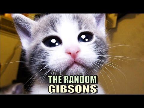 Talking Kitty Cat 48 - The Random Gibsons