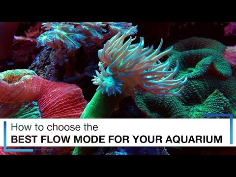 How to Choose the Best Flow Mode for Your Aquarium Wave Pumps