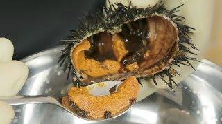 """How to Prepare LIVE Sea Urchin """"Uni"""""""