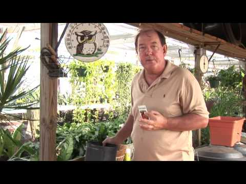 The Best Way to Plant Tomato Seeds