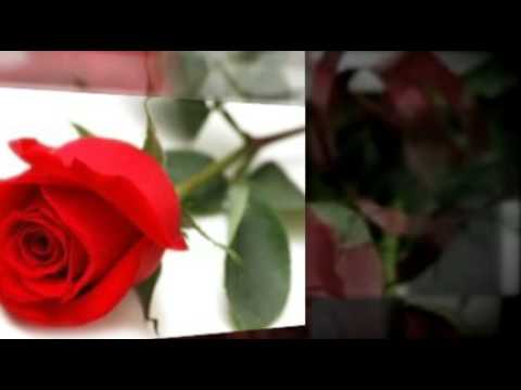 Buy Mothers Day Flowers and Gifts Online