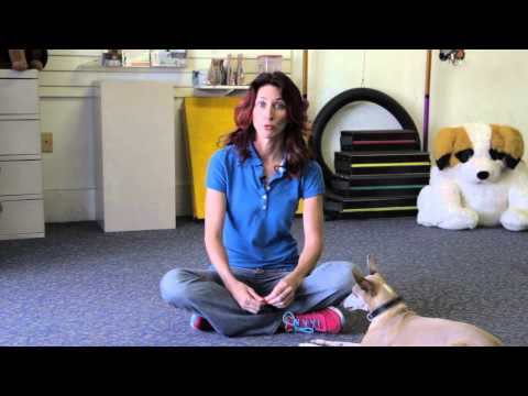 How to Stop Dogs From Fighting During Mealtime : Dog Training & More