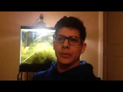How to get Rid of Green Aquarium Water