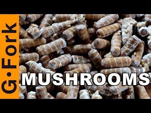 Grow Mushrooms The Easy Way On Logs With Plug Spawn - GardenFork