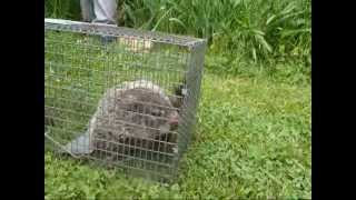 How To Get Rid Of A Groundhog That Is Damaging Your Foundation