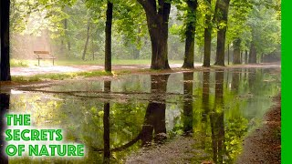 Prater - The Green Stadium - The Secrets of Nature
