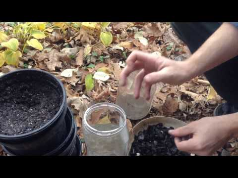 Charcoal Water Filter Experiment