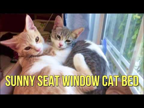 Sunny Seat Window-Mounted Cat Bed 50 lbs