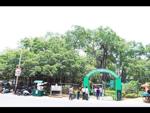 The Big Banyan tree (Dodda Alada Mara) – Bangalore