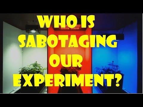 Grow Experiment Sabotage!!