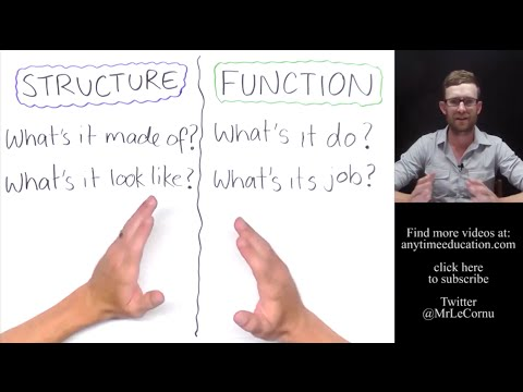 Structure and Function in Biology