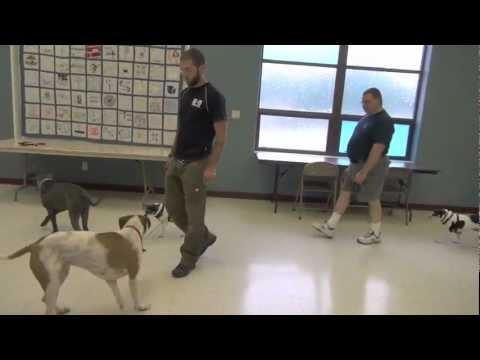 True Dog Aggression Rehabilitation - dog training