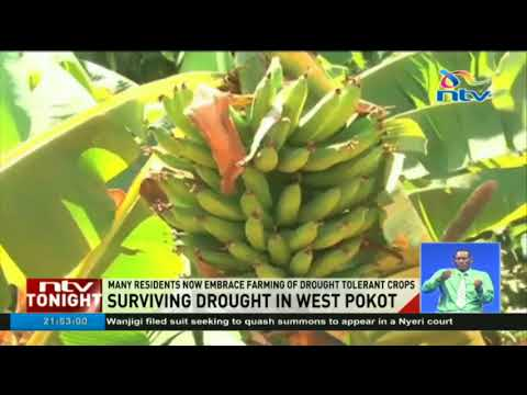 West Pokot county using irrigation technologies to improve food production