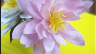 Paper Water Lily Videos 9tube Tv