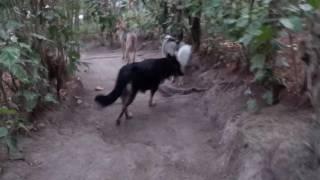 Dogs having fun off the leash!