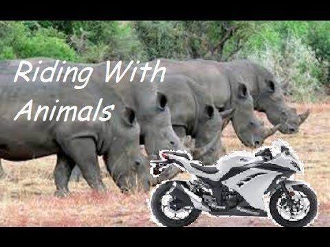 Preventing motorcycle road rage   Ninja 300