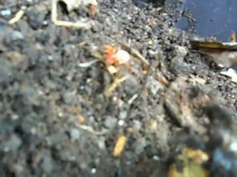 Ants and Spider in the compost pile