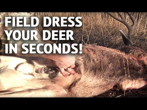 How To Field Dress A Deer In Seconds