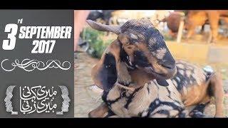 Bakra-Eid Special   Meri Kahani Meri Zabani   SAMAA TV   03 Sep 2017