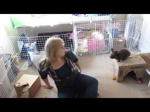How To Bond With Your Bunny Rabbit. Tips & Tricks That Worked For Me!