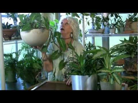 Houseplants #7:  Drainage and pots
