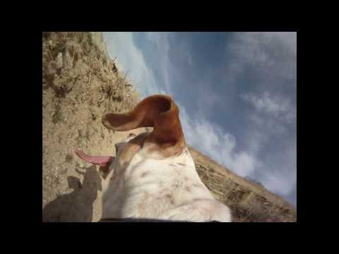 Cooper Cam (1st person doggy view)
