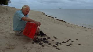 Malaysian Green Turtles | Attenborough 60 Years in the Wild | BBC