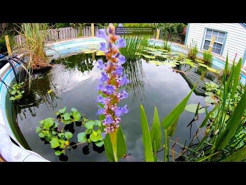 MAJOR BackYard SWIM Pond Upgrade!!! Sawgrass Island!!!