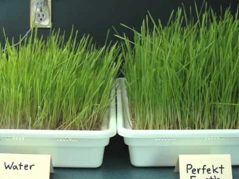 Eliminating Mold in Wheatgrass
