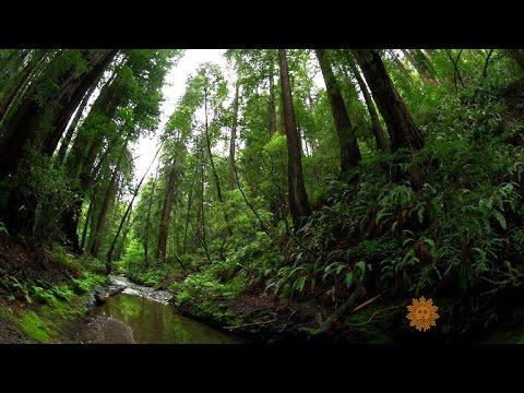 Counting species in California's Muir Woods