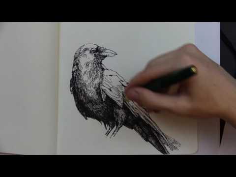 The Raven ~ Edgar Allan Poe (Reading and Sketch)
