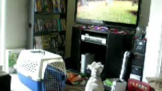 Zoe vs TV Kitties