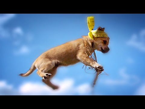 FLYING KITTENS vs FLYING PUPPIES at 1000 fps // ScottDW